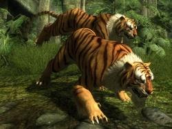 Tiger In Anderen Sprachen